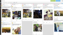Hootsuite example: Pets As Therapy